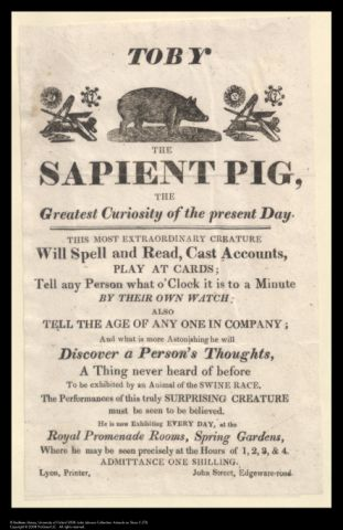 Handbill advertising Toby, the Sapient Pig